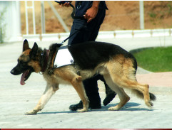 Sicherheitsüberwachung mit Wachpersonal